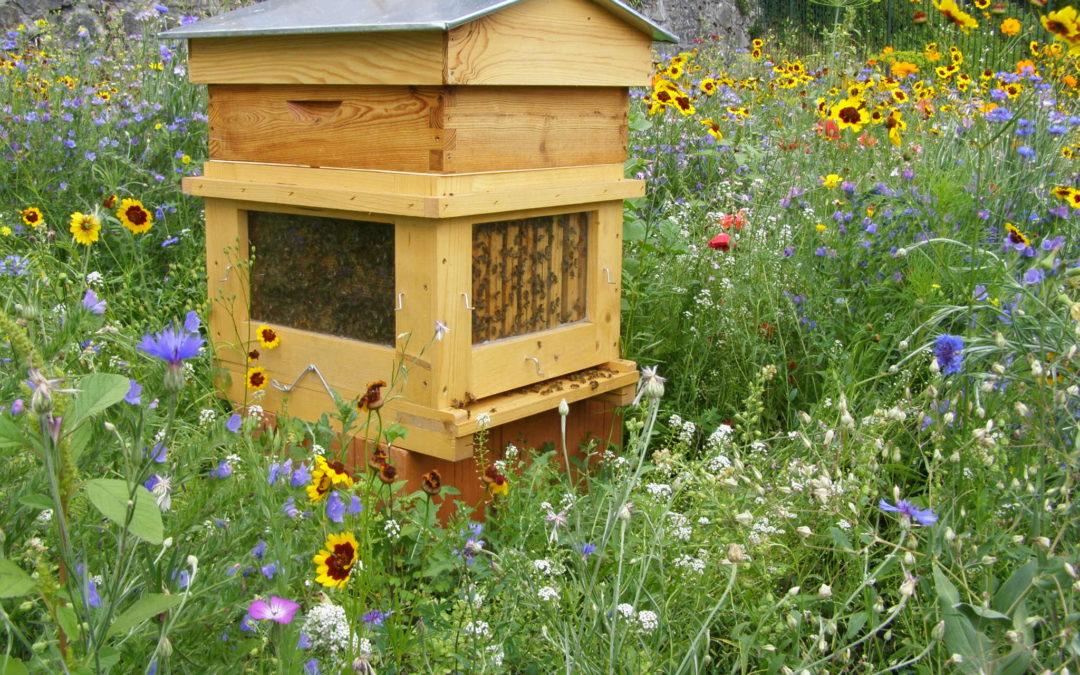 Déclaration des ruches du 1er septembre au 31 décembre